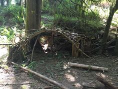 Leave sticks for kids to make a fort