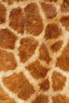 Giraffe: how fun would it be to paint a wall in a bedroom this pattern?
