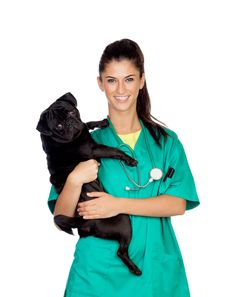 Do you have to be a veterinarian first to become a zoologist?