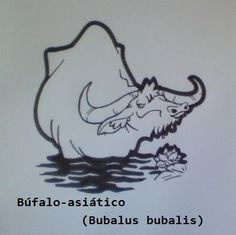 Búfalo-asiático