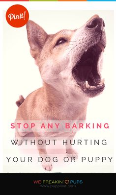 Stop ANY Barking Without Hurting Your Dog or Puppy  #puppies #puppy #pup #dogs #dog #pets #pet #tips #tip #tricks #trick #teach #training #howto #how #stuff #ideas #animal