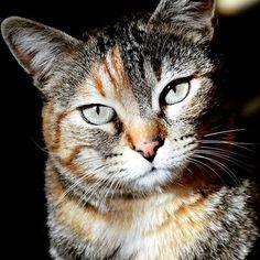 """""""Pochi animali riescono a manifestare il loro umore attraverso le espressioni in modo tanto distinto quanto i gatti.""""  Konrad Zacharias Lorenz  #gatto #occhioni #espressione #spettacolo #colori#arancione #macchie #myphoto #martifoto_ #nikonphoto_ #nonna #ig_cuneo_ #ig_cat #baffi #luce #ombra by martina_nittardi"""