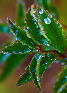 Dew drops - nature's beauty!
