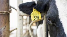 Snapshot of a modern dairy farm: The sustainable technologies impacting the dairy industry