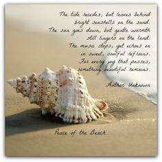 Sally Lee by the Sea Coastal Lifestyle Blog: At the Beach