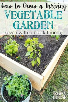 How to Plant a Thriving Vegetable Garden | blesserhouse.com - The tricks and secrets to growing a gorgeous vegetable garden even with a black thumb. #vegetablegarden #plantingtips