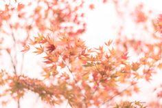 https://flic.kr/p/B8Q5RP | 紅葉 | Red leaves in winter