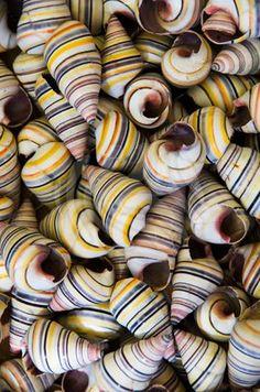 #shell #pattern
