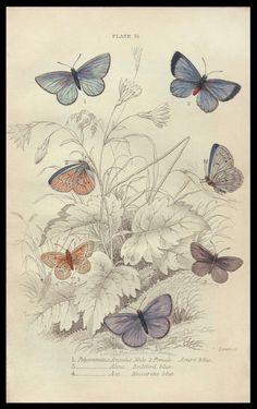 vintage engraving
