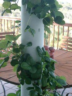 One Photo Tower Garden Aquaponics Indoor Vertical Vegetable Garden Aq.