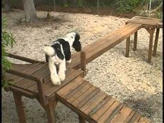 Dog Obstacle Confidence Course, would love to build such a fun course for our dogs!