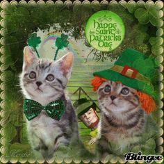 saint patricks day cats - Google Search