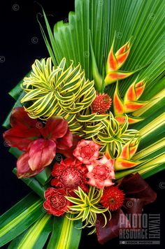 I love heliconia and ginger! Arrangement of heliconia, gingers, bromeliad and foliage Exotic Flowers, Tropical Flowers, Tropical Plants, Beautiful Flowers, Tropical Flower Arrangements, Church Flower Arrangements, Deco Floral, Arte Floral, Ikebana