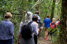 Puketi Rainforest Guided Walks