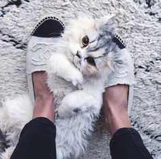It's totally acceptable to rub a kitty with your shoes... only if they are Coco Chanel!