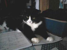 Meet Fartie Cat, busy reading