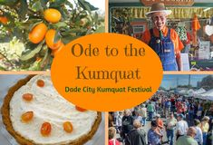 """Dade City celebrates its """"ode to the kumquat"""" during the 2017 Kumquat Festival honoring its distinction as the world's leading supplier of the petite fruit. Dade City Florida, Central Florida, County Schools, Pasco County, Sunshine State, Day Trips, Things To Do, Road Trip, Brunch"""