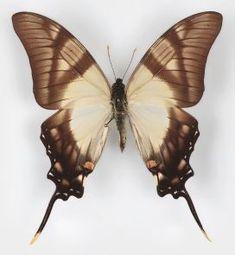 Slikovni rezultat za moths