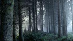 @дневники — nightfall grave