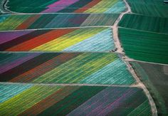 tulip fields from above, Holland...just up the road from where I used to live.