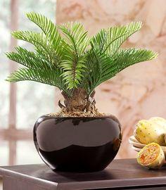 Artikeldetails:  Künstliche Palme, Im dekorativen Topf, Höhe: ca. 27 cm,  Material/Qualität:  Aus Kunststoff, Topf aus Keramik,  ...