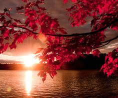 Stunning Photography, Autumn Photography, Street Photography, Beautiful Sunset, Beautiful World, Beautiful Places, Cool Pictures, Cool Photos, Beautiful Pictures