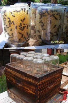 Why not have the bees store the honey straight in the jars?    Learn how to keep your own honey bees: 20 books and manuals about Beekeeping. (Original idea from Miller Compound HoneyBees and Agriculture)