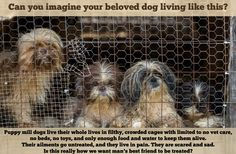 Please REPIN to remind others to Adopt, Don't Shop. If you buy a puppy online or at a pet store, you are supporting a puppy mill. There are parents left behind that are living in squalor.
