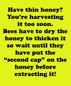 If you have think honey, you are harvesting the honey too soon. You need to wait a little longer for the bees to get the second wax cap on it then it will be the right consistency. Honey Bee Hives, Honey Bees, Raw Honey, Buzz Bee, Raising Bees, Bee Farm, I Love Bees, Bee Sting, Bee Pollen