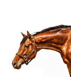 2014 Large Wall Size Horse on White Calendar by barbaraobrienphoto