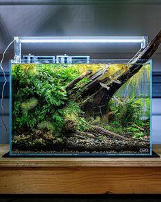 Nano Aquarium, Aquarium Design, Aquarium Fish Tank, Fish Tank Terrarium, Terrariums, Cool Fish Tanks, Tropical Fish Tanks, Aquariums, Aquascaping