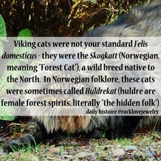 Viking forest cat considered a forest spirit Norse Pagan, Old Norse, Norse Mythology, Viking Facts, Viking Culture, Viking Life, Viking Woman, Norse Vikings, Norwegian Forest Cat