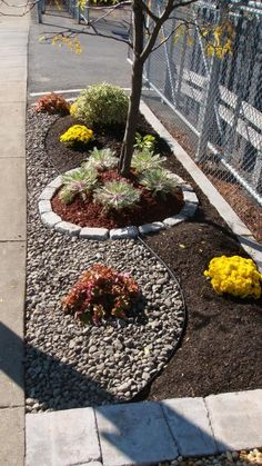 Bark dust and gravel separated for small strip between driveway and neighbor's path! I love this idea even without the plant circles