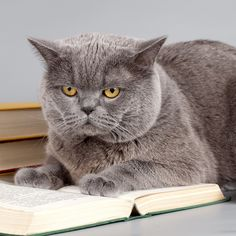 How to Speak Cat: Welcome to the Secret World of Cat Lingo | Catster