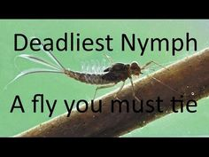 Deadliest nymph A fly you must tie - YouTube