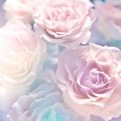 Wedding Background Rose Pastel Flowers Pink Roses Raindrops And