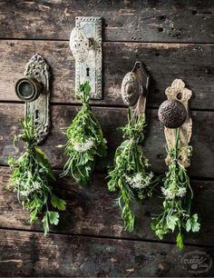 Leuk idee...kruiden laten drogen aan oude deurknoppen.