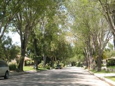 ... Toering's Palos Verdes Homes Blog: California: Rolling Hills Estates Rolling Hills Estates, Street Trees, Yahoo Images, Image Search, Sidewalk, California, Homes, Blog, Palo Verde