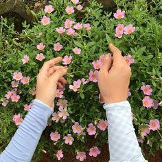 Flowers... Ih: @farahfakhira