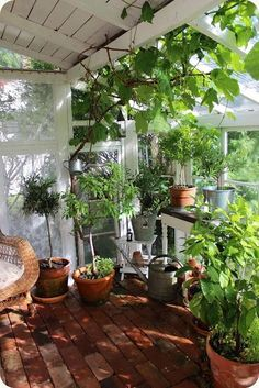 THE BLANK: Greenhouse ~ Vintage greenhouse-Check out the roof....