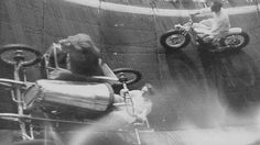 Why Yes, That Is a Lion Riding a Sidecar  You've got to love the '30s in America—a time when when men were men, the economy was only slightly worse off than it is now, and ladies raced about Velodromes with lions for co-pilots.