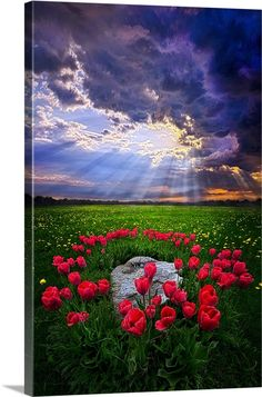 Beautiful Sky, Beautiful World, Beautiful Landscapes, Beautiful Flowers, Beautiful Places, All Nature, Amazing Nature, Beautiful Nature Pictures, Nature Tree