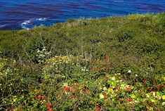Glorious carpets of wildflowers cover Monterey County coastline in California Romantic Places, Beautiful Places, Great Places, Places To See, Flower Places, Beach Place, Monterey County, Wildflowers, Carpets