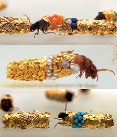Caddis by Hubert Duprat: Caddisfly larvae are aquatic, and spin protective silk cases which incorporate bits of material from their surroundings, such as gravel, twigs or small pieces of shell. In this remarkable work, French artist Hubert Duprat (b.1957) has collaborated with caddis larvae by gently placing them in an environment full of gold, pearls and semi-precious stones. The caddis then spin these materials into their casings to produce breathtaking jewel-encrusted covers. #Caddisfly