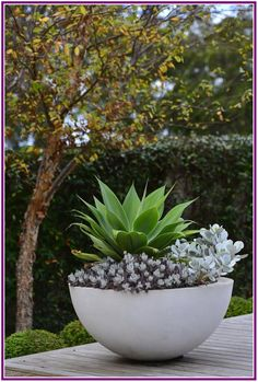 trendy Ideas for succulent garden design outdoors house plants Succulents Garden, Garden Pots, Potted Garden, Succulent Planters, Potted Plants, Plant Texture, Contemporary Planters, Modern Contemporary, Drought Tolerant Landscape