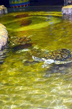 #SeaWorld #Jakarta #Indonesia #Turtles