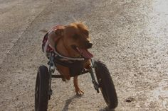 A smiling Webster enjoying his adventure outside (on the ice) in his Eddie's Wheels wheelchair.