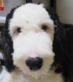 ❤ looks like Snoopy, for real!!!!