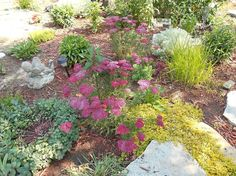 Creating Interest in the Garden With FOLIAGE