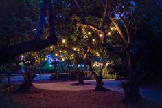 Best Wedding Location in Miami - The Old Grove